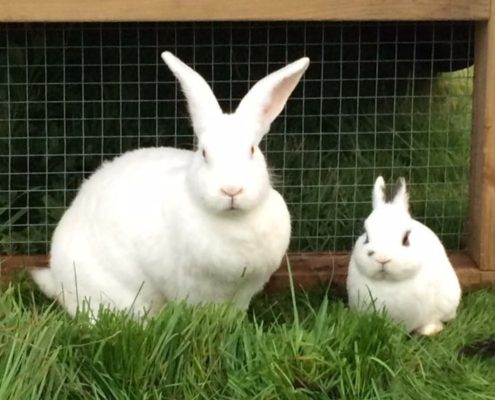 rspca rescue rabbits