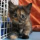 rescue kitten rspca